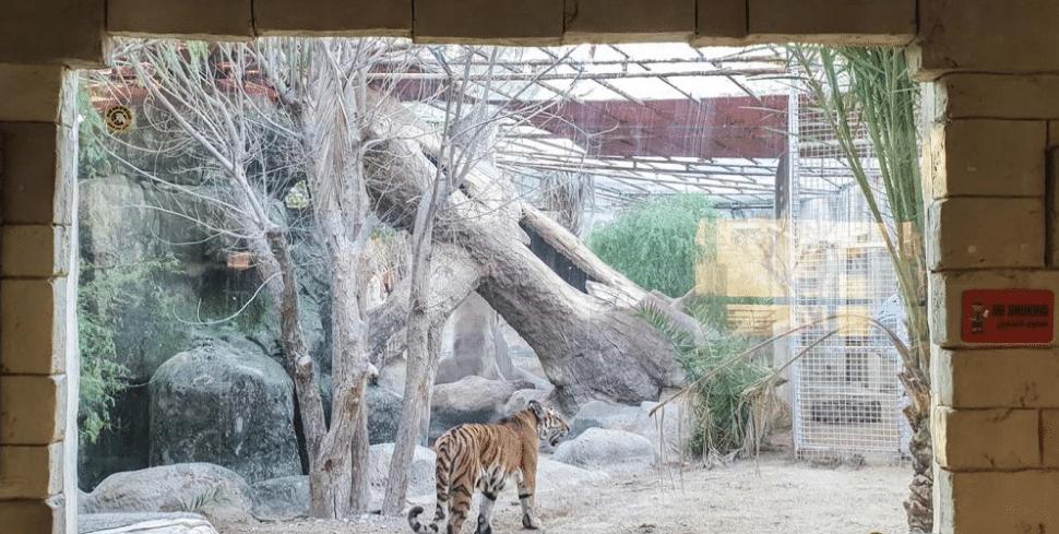تحتوي هذه الصورة على سمة alt فارغة؛ اسم الملف هو حديقة-الحيوانات-ابوظبي-2-1.png