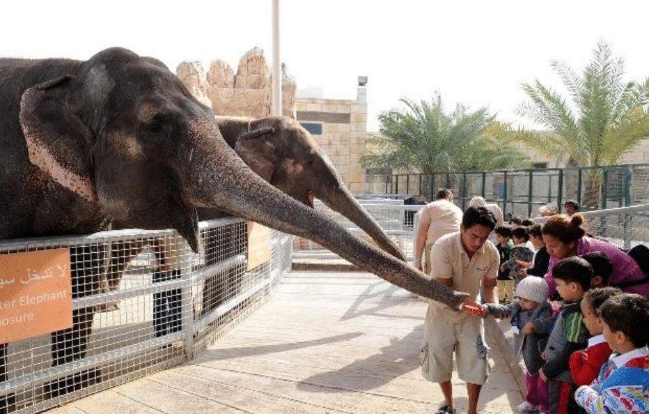 حديقة الحيوانات ابوظبي