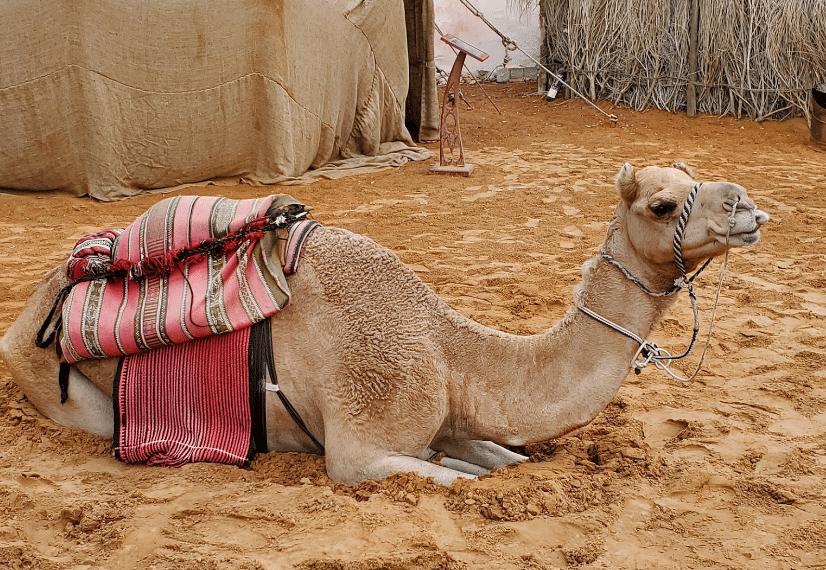 قرية التراث ابوظبي